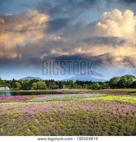 Spring Season In Japan With Fuji Mountain As Background