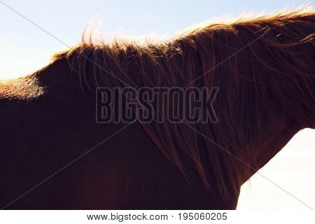 Side view midsection of a brown horse against the sky
