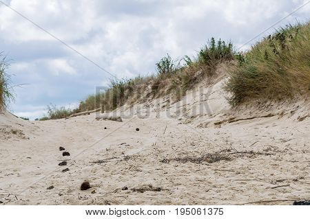 Close up of a sand dune and debris on a beach in Virginia