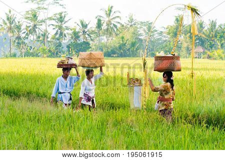 Balinese People In Traditional Costumes Fulfill Religious Ceremonies And Offerings To The Gods