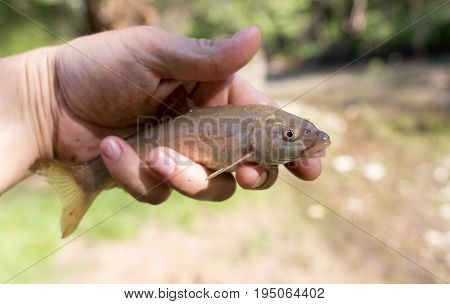 A fish in the hand of a fisherman in nature .
