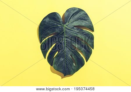 Tropical monstera leaf with hard shadow on a yellow background