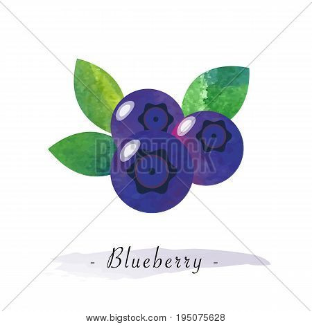 Colorful Watercolor Texture Vector Healthy Fruit Blueberry