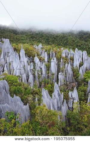 limestone pinnacles formation at gunung mulu national park borneo malaysia