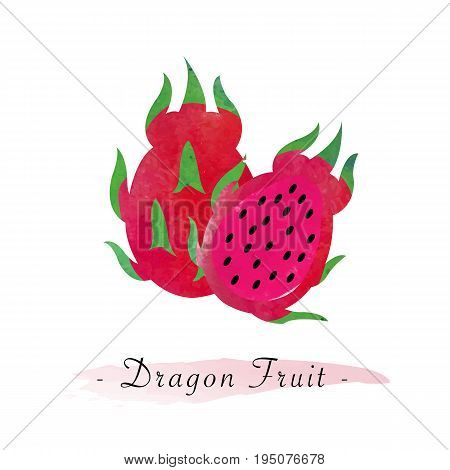 Colorful Watercolor Texture Vector Healthy Red Meat Dragon Fruit Pitaya