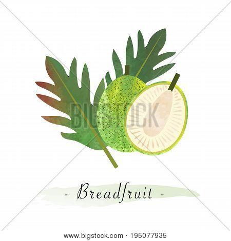 Colorful Watercolor Texture Vector Healthy Fruit Breadfruit