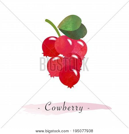 Colorful Watercolor Texture Vector Healthy Fruit Cowberry