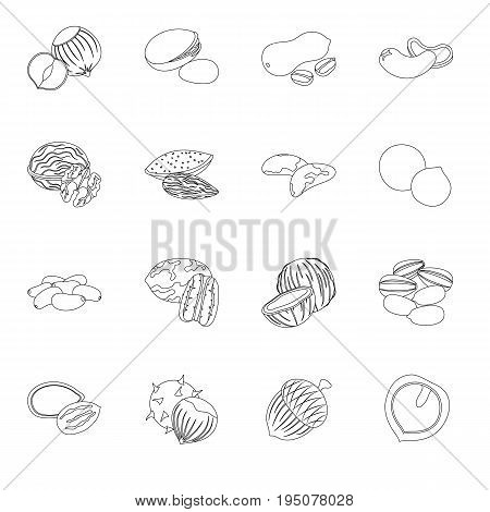 Hazelnut, pistachios, peanuts and other types of nuts.Different types of nuts set collection icons in line style vector symbol stock illustration.