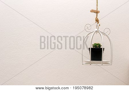 fresh green cactus in black plastic pot hanging in basket with white wall background small decorative minimal nature modern interior concept