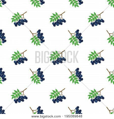 Seamless Background Image Colorful Tropical Fruit Black Rowan Berry