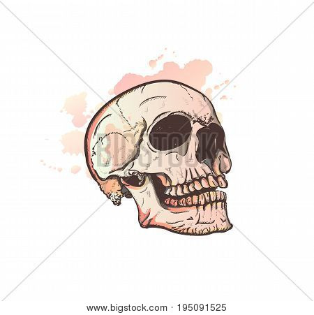 Skull Sketch With Watercolor Effect. Vector, gloomy sad, funny