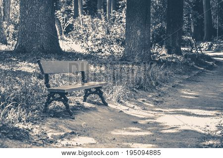 Old vintage photo. Park bench sunny day summer grass copy space
