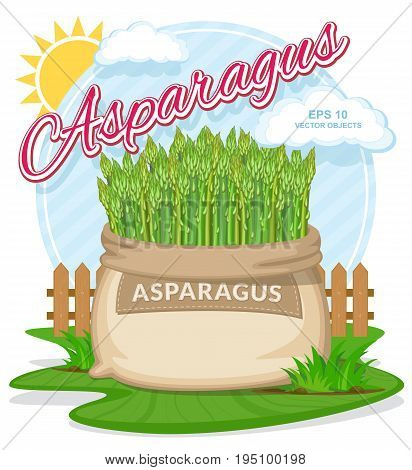 Vector illustration of eco products. Asparagus in burlap sack. Full sacks with fresh vegetables. Bag with harvest on the summer garden. Harvesting and food concept