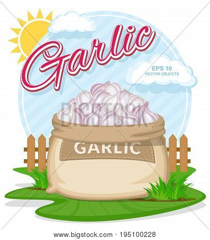 Vector illustration of eco products. Garlic in burlap sack. Full sacks with fresh vegetables. Bag with harvest on the summer garden. Harvesting and food concept