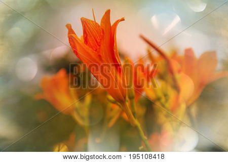 Amazing colorful flower