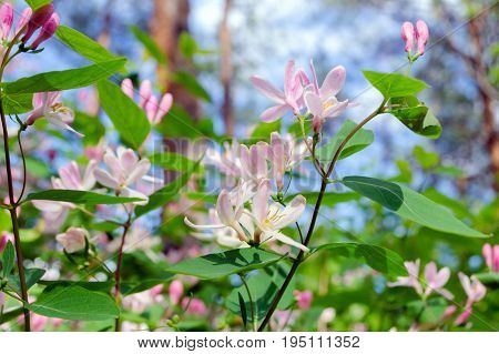 Gently pink flowers on a bush in the forest
