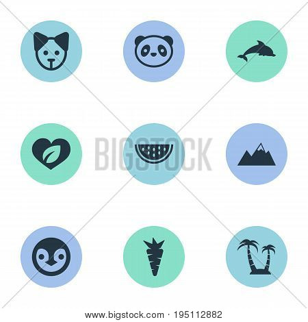 Vector Illustration Set Of Simple Natural Icons. Elements Diver, Bear, Cantaloupe And Other Synonyms Heart, Palm And Root.