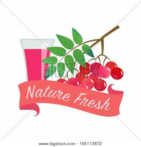 Colorful Watercolor Texture Vector Nature Organic Fresh Fruit Juice Banner Red Rowan Berry