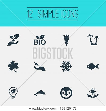 Vector Illustration Set Of Simple Ecology Icons. Elements Frond, Aquatic Wildlife, Carrot And Other Synonyms Leaf, Dolphin And Reef.