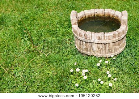 Rural animal water drinking pot on green grass field and white common daisy flowers