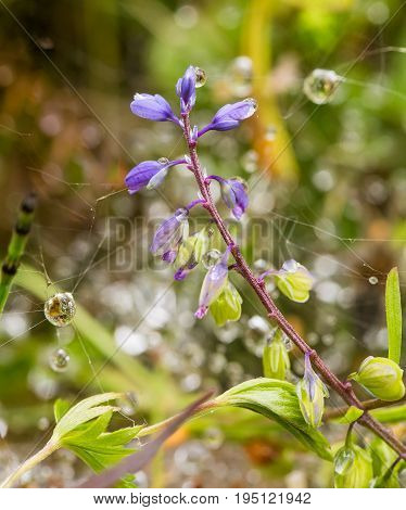 A beautiful purple blue flower on a forest floor after the rain. Shallow depth of field closeup macro photo.