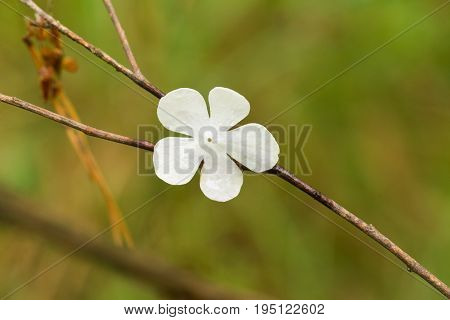 Beautiful white flower petals fallen on leaves in forest after the rain. Decorative look. Shallow depth of field closeup macro photo.