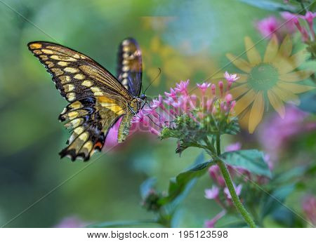 Butterfly sipping sweet nectar on red flowery bush