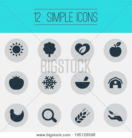 Vector Illustration Set Of Simple Energy Icons. Elements Farmhouse, Vegetables, Organic And Other Synonyms Pounder, Nature And Food.