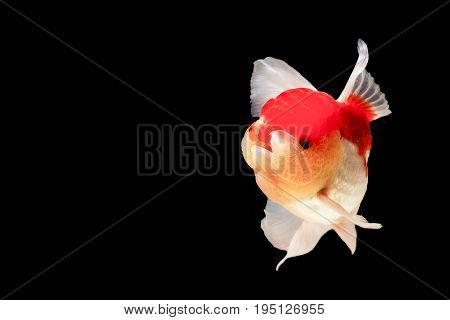One goldfish are isolated on Texture background