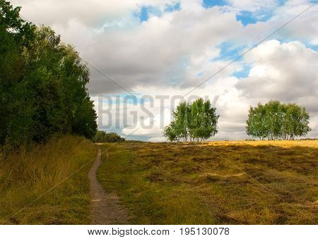 walk in the countryside among fields and birch pleasant autumn day in the silence of the city