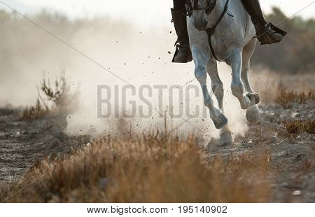 Rider on a spanish horse running gallop