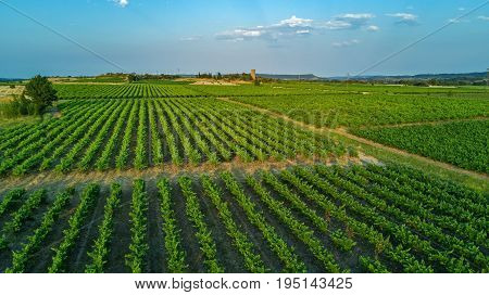 Aerial top view of vineyards landscape from above background, South France