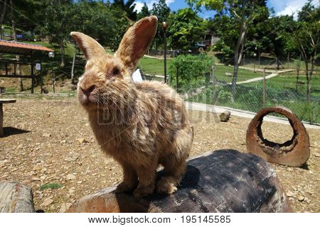 Cute Rabbit In Outdoor