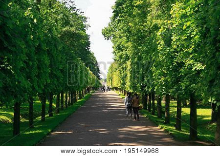St. Petersburg Russia - June 28 2017: Green alley in Peterhof in St Petersburg Petersburg