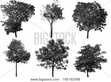 The black tree is set on a white background.