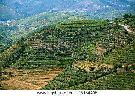 Douro Valley, Portugal. Top view of the vineyards are on a hills.