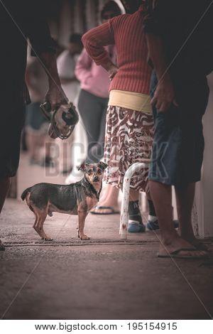 Barra do Sul Santa Catarina Brazil - July 8 2017: Street dog waiting for some food.