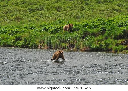 Two Young Bears Approaching A Favorite Fishing Hole