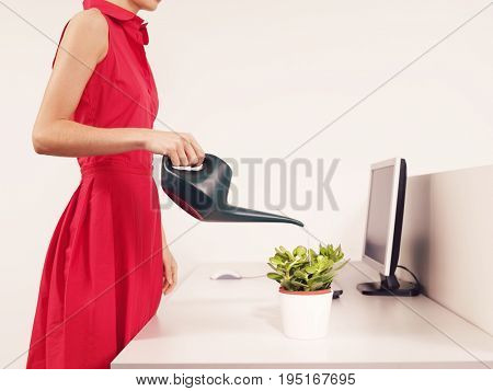 Side view midsection of a female office worker watering desk plant