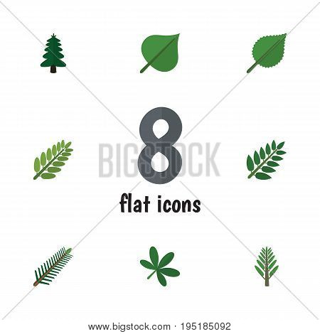 Flat Icon Bio Set Of Hickory, Acacia Leaf, Maple And Other Vector Objects. Also Includes Spruce, Leaves, Willow Elements.
