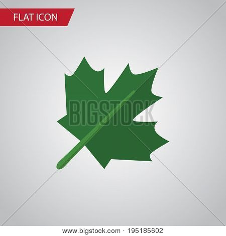 Isolated Maple Flat Icon. Oaken Vector Element Can Be Used For Oaken, Maple, Leaf Design Concept.