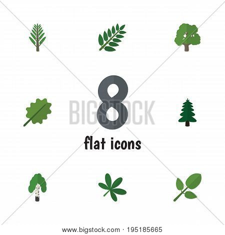 Flat Icon Nature Set Of Foliage, Alder, Timber And Other Vector Objects. Also Includes Forest, Foliage, Willow Elements.