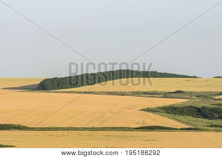 harvest of the steppe fields in the summer