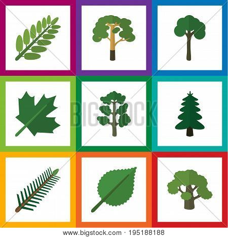 Flat Icon Bio Set Of Tree, Linden, Oaken And Other Vector Objects. Also Includes Linden, Leaf, Spruce Elements.