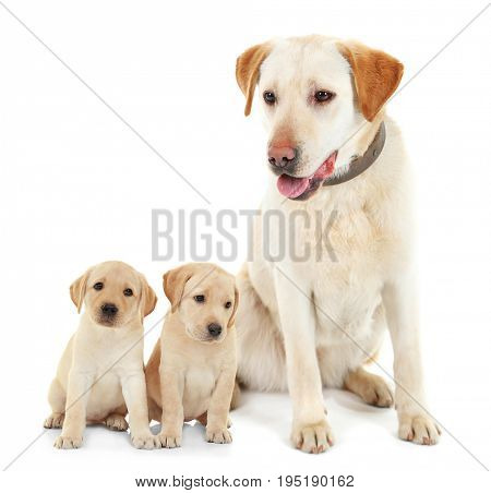 Dog and cute puppies on white background