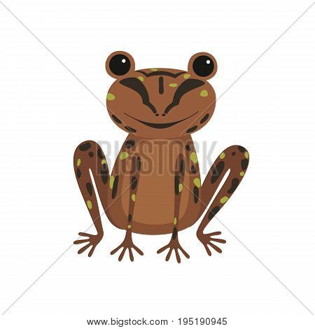 Single frog with brown skin illustration. New Zealand Native Frog. Archey's frog