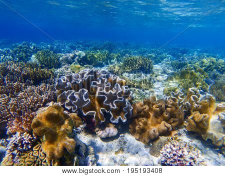 Underwater landscape with coral reef. Coral undersea photo. Seashore texture. Coral closeup. Sea bottom with young coral ecosystem. Tropical seashore snorkeling. Marine relief landscape. Tropic lagoon
