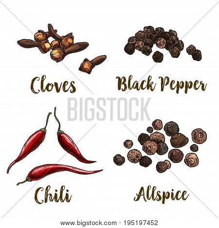Full color realistic sketch illustration of allspice, cloves, black pepper and chili, vector illustration