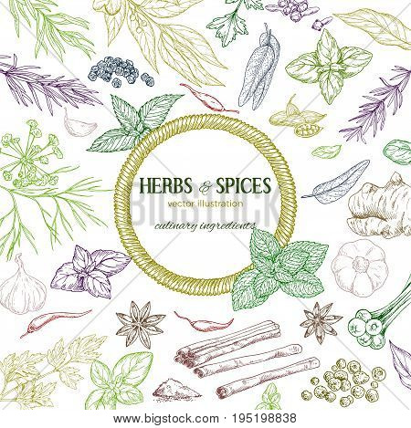 Round rope  banner surrounded by colored sketch herbs and spices, vector illustration