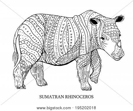 Sumatran rhinoceros. Rare animal conservation status, vector illustration